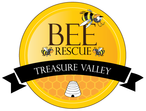 Treasure Valley Bee Rescue